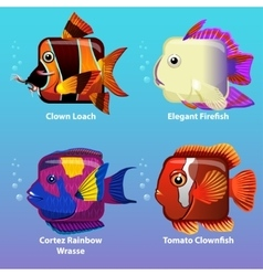 stylized fish are square vector image