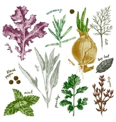 hand drawn herbs and spices set in color vector image vector image