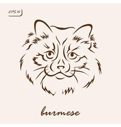 Burmese vector