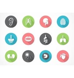 human anatomy icon set vector image