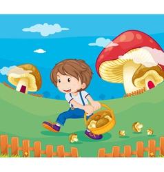Boy picking Mushrooms vector image