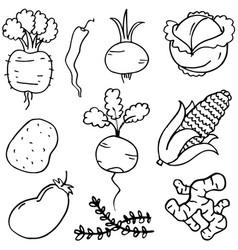 Doodle of vegetable vector