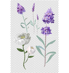 Lavender and peony flowers collection vector