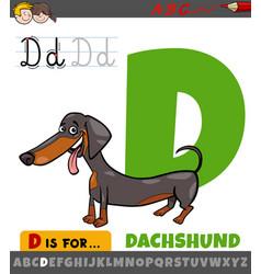 Letter d worksheet with cartoon dachshund dog vector