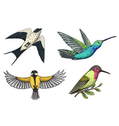 small birds of paradise barn swallow or martlet vector image