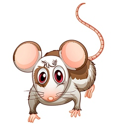 A mouse vector