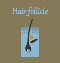 Human organ icon in flat style hair follicles vector