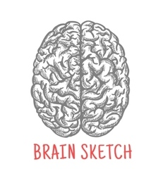 Vintage sketch of human brain for creative design vector image