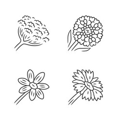 Wild flowers linear icons set cow parsnip vector