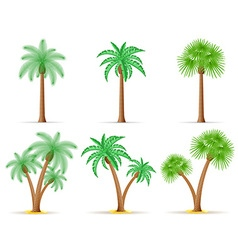 palm tree 27 vector image vector image