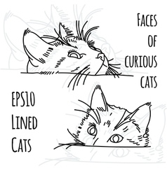 two curious cat muzzles vector image