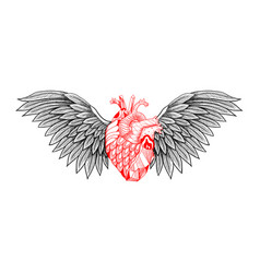 textured heart with wings vector image vector image