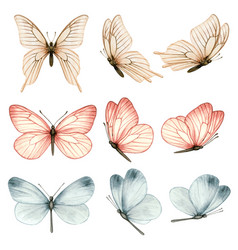 beautiful watercolor butterfly collection vector image