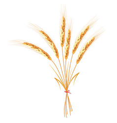 Golden wheat isolated on white background vector