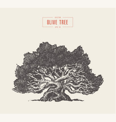 high detail olive tree hand drawn vector image