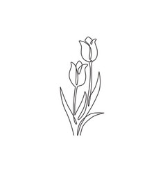one continuous line drawing beauty fresh tulip vector image