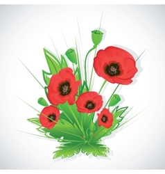 Poppy flowers bouquet vector image