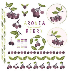 Realistic aronia berry clipart vector