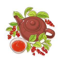 Schisandra tea vector