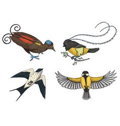 small birds paradise barn swallow or martlet vector image