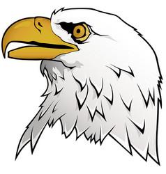 bald eagle portrait vector image