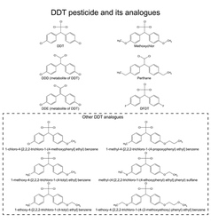 DDT pesticide and its alanogues vector image