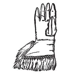 glove oliver cromwell vintage engraving vector image