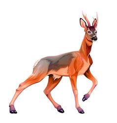 Roe deer vector