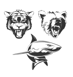 elements for sport team labels with vector image