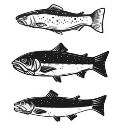 set of trout fish isolated on white background vector image