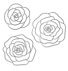 roses black outline on the white background vector image vector image