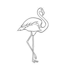 black and white image flamingo isolated vector image