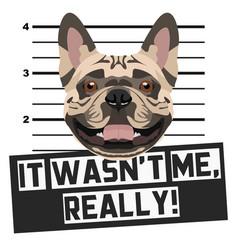Mugshot mug shot french bulldog vector