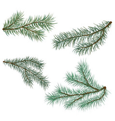 pine and spruce branches vector image
