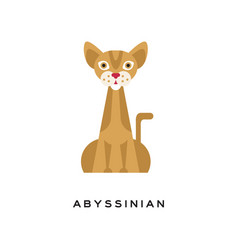 Purebred abyssinian cat elegant short-haired vector