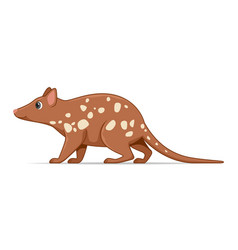 Quoll animal standing on a white background vector