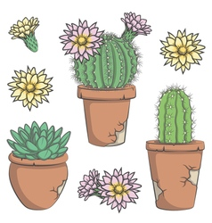 set colored cactus with flowers in old pots vector image
