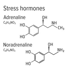 Adrenaline and noradrenaline stress harmones vector