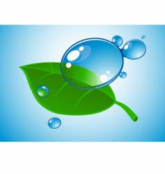 water drop and leaf vector image vector image