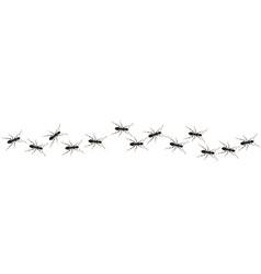 Ants path vector