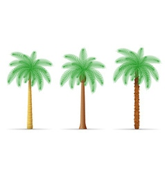 Palm tree 30 vector