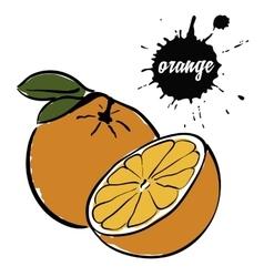 fruit ripe orange vector image vector image