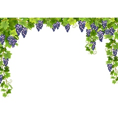 Blue grape floral frame vector