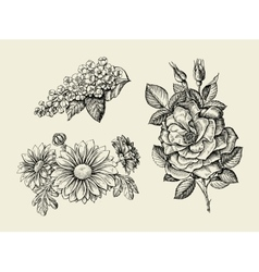 Flower Hand drawn sketch dogrose rosehip wild vector image