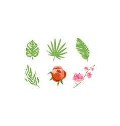 tropical plants and flowers collection design vector image
