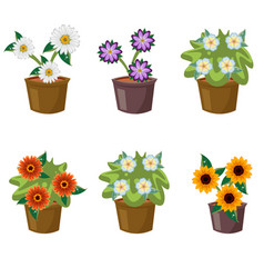set with flat flowers in pots vector image