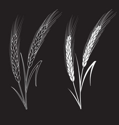 Black ang white wheat isolated on black background vector