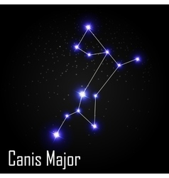Canis Major Constellation with Beautiful Bright vector