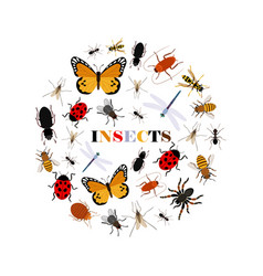 flat insects icons in round shape isolated vector image