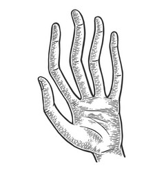 hand with long spaghetti fingers sketch engraving vector image